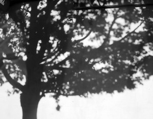 tree's shadow...
