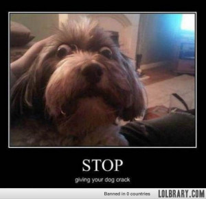Crackhead Dog