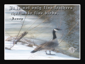 It is not only fine feathers that make fine birds