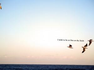 birds,bird,freedom,flight,quotes,free-dbae6adbc2b523f4728de63a3f3fbe47 ...