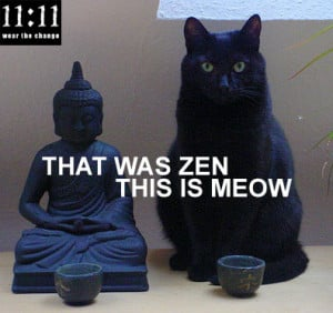 Buddhist Cat: That was Zen, This is Now