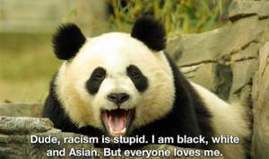funny panda bear black white asian
