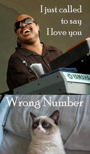 grumpy cat, stevie wonder, funny pictures