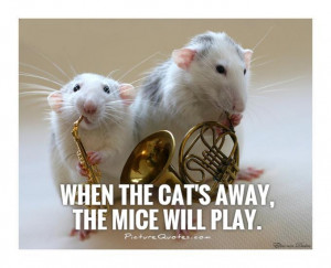 Cat Quotes Proverb Quotes Play Quotes