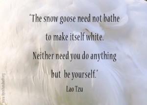 Snow goose quote - Lao Tzu