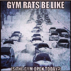 Gym rats be like, is the gym open today