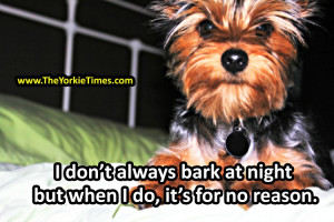 Anyone else find that their Yorkies do this as well?