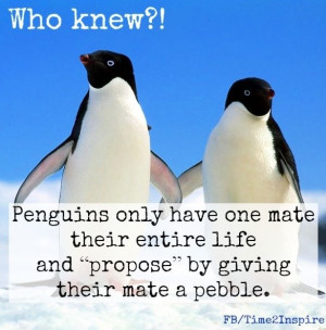 penguins in love quotes