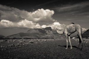 The Oman Desert, by Petros Zouzoulas