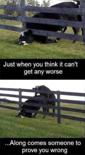 ... this Funny Pictures Quotes Jokes Photos Images Pics Cow For picture