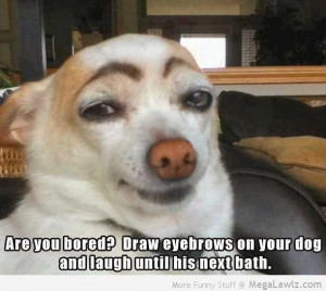 funny-eyebrows-dogs-pictures