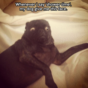 funny pictures shower time dog face wanna joke.com