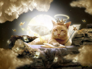 cat-in-heaven-wallpaper__yvt2.jpg