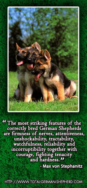 the german shepherd dog breed from someone who has lived with this dog ...