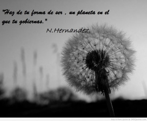 Spanish Quotes HD Wallpaper 12