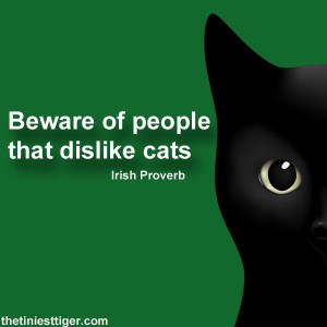 ... Cat People Quotes, Cat Words, Black Cat Quotes, Hate Cat, Irish People