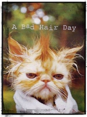 bad #hair #day #funny #animals