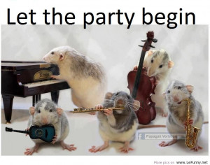 Let the party begin funny hamster musician group