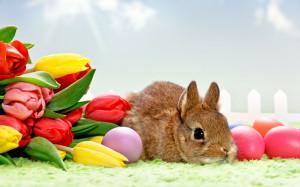 File Name : Easter Bunny HD Wallpaper