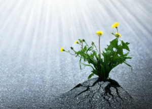 Plants emerge though asphalt, symbol for bright hope of life and ...
