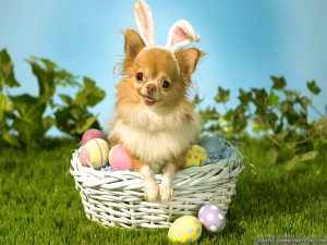 Easter Sayings Funny Eggs