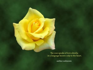 Yellow rose flower desktop wallpaper with an inspirational rose quote ...