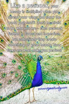 ... peacock art peacock feathers art quotes quotes 3 peacock quotes flaws