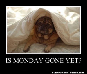 ... if you feel the very same way as this pug dog… Is Monday Gone yet