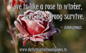 Be Strong Quotes Love Love is like a rose in winter,