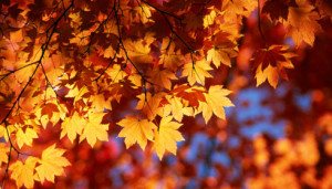 Seasonal Color Inspiration: Autumn