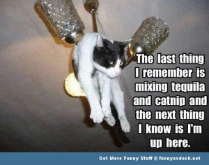 drunk cat lolcat animal funny pics pictures pic picture image photo ...