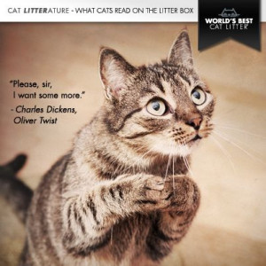 Cat, kitten, pleading, quote: Charles Dickens, Oliver Twist, cute ...