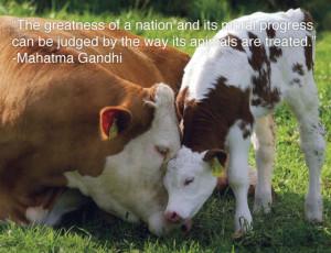 25 Inspiring Animal Quotes