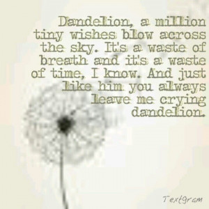 Dandelion Love Quotes Dandelion Love Kacey Musgraves