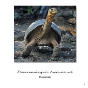 Inspirational quotes wildlife wallpapers