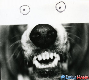 crazy dog drawing