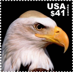 Related Pictures the bald eagle is the national symbol of the u s a