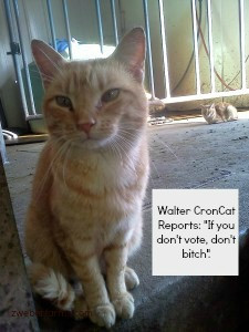 funny, quotes, election, cat, kitten, cats, photo