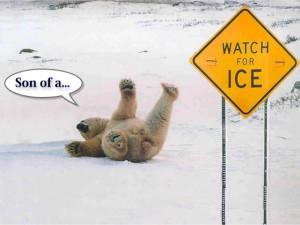 Some very funny polar bear jokes and lines