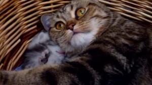 cats-in-the-cradle-992x558.jpg