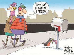 Funny First Robin Of Spring Cartoon Image Picture