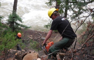 Hazard Tree Removal Pine Beetle Mitigation Insect and Disease ...