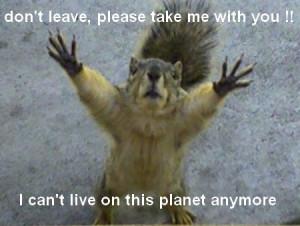 funny squirrel picture funny squirrel picture