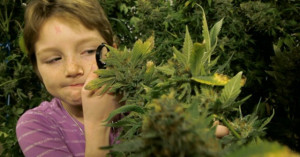 Why Marijuana Prohibition is bad for the children
