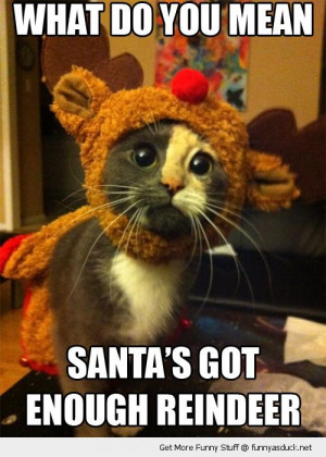 ... christmas enough reindeer cute funny pics pictures pic picture image