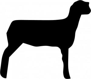 Show Lamb Clip Art Pictures