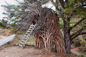 treehouse-7-jpg_175417.jpg