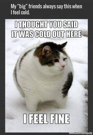 funny-fat-cat-winter-photo-2014-super-meme.jpg