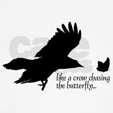 crow chasing a butterfly - Google Search