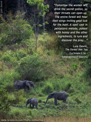 African elephants, from Luis Devin's anthropological research in ...